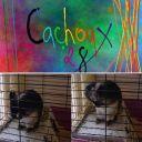 Cachoux28