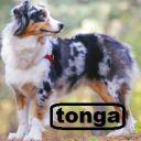 tonga17