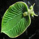 laura33 00