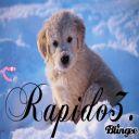 rapido3